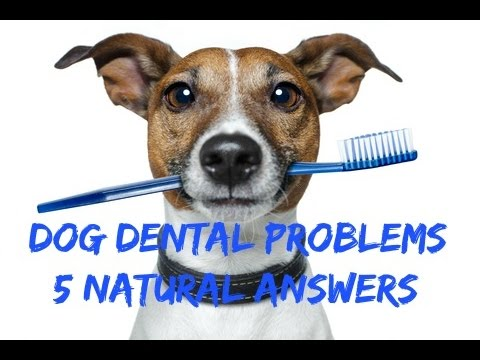 Dental Problems In Dogs: 5 Natural Answers