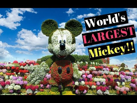 World's Largest Mickey Mouse Topiary Dubai Garden Better than Epcot Flower Festival? Disney Spring