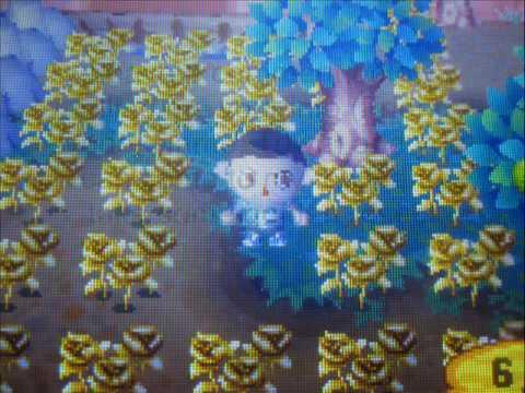 ACWW - Free Golden Roses