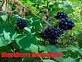 Blackberry Moonshine