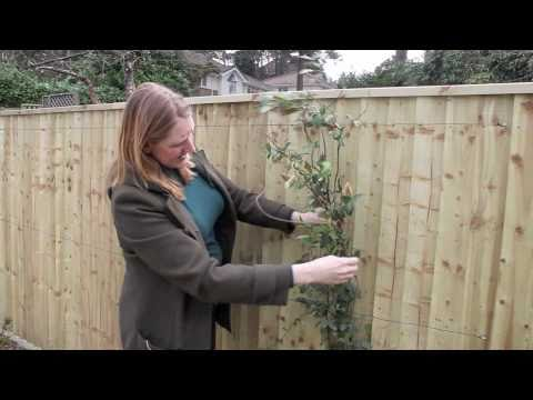 Gardening Tips: Supporting Climbers