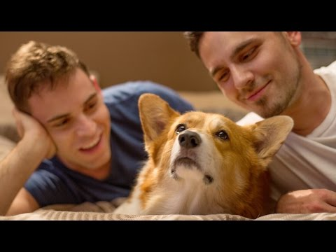 Weird Things Couples Do With Their Dogs