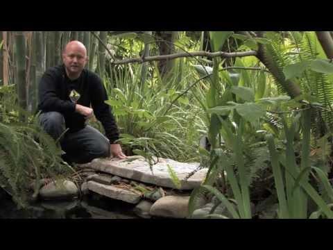 Koi Pond | Water Garden Design
