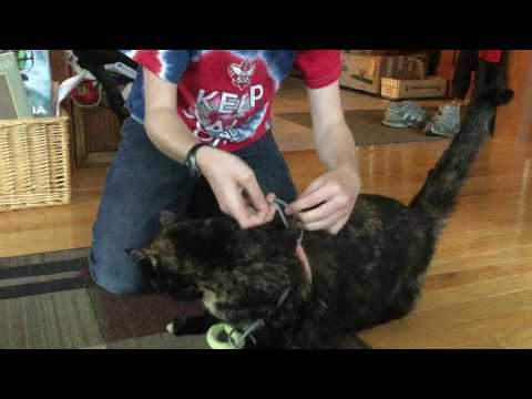 Easy To Make Cat Leash