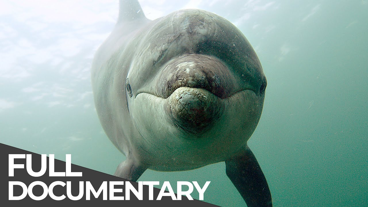 Ocean Stories 3 - Dolphins and Whales | Free Documentary