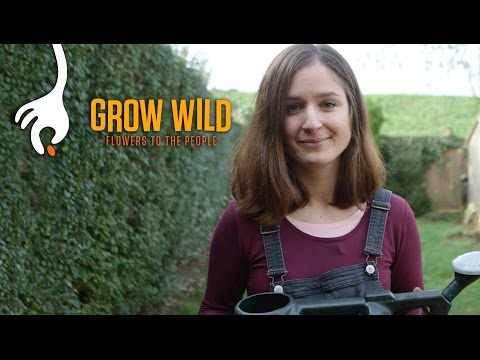 How to Sow a Wild Flower Patch with Hannah Grows