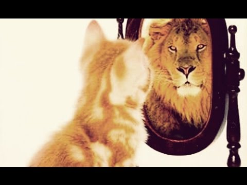 3 Steps To Supercharge Your Confidence For Success in Business!