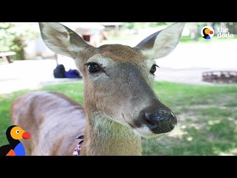 Sweetest Rescued Deer Helps Mom Overcome Cancer | The Dodo
