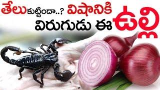 Download తేలు కుట్టిందా ..? విషానికి విరుగుడు ఈ ఉల్లి || Scorpion Poison Natural Antidote This Raw Onion Video