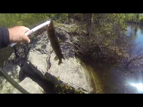 How to rig, use and fish for Pickerel with the Zoom Super Fluke