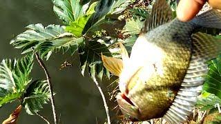 Nembak ikan dengan senapan paser dari atas pohon...sungai mati bengawan solo,sukoharjo...