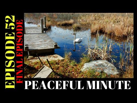 Peaceful Minute ~ Episode 52 ~ Mute Swan at Silver Lake ~ Final Episode