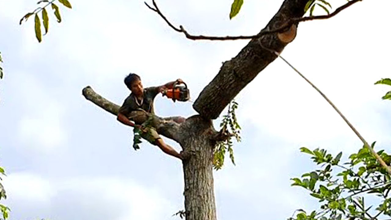 Top 10 Extremely Dangerous Tree Felling Fails ! Trees falling into House