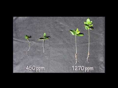 What if higher CO2 concentrations are actually good for plant growth?