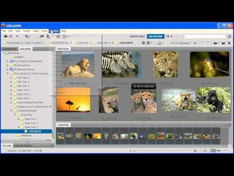 3.1 Creating a Contact Sheet: Adobe Photoshop CS4 Video