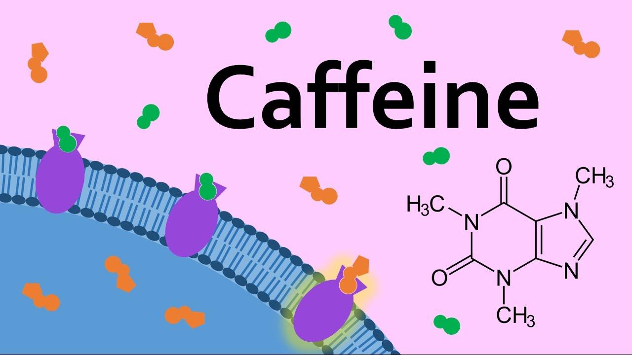 Download Caffeine and Adenosine Receptors MP3 Gratis