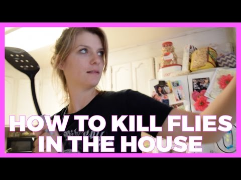 How to Kill Flies in the House