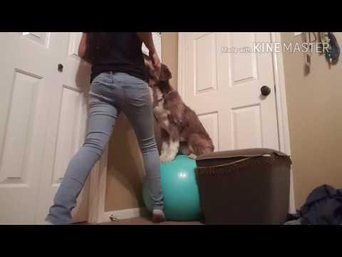 Service Dog Balance Exercise
