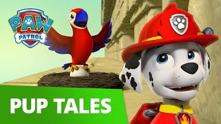 Pet Parrot Rescue with Marshall! 🦜 PAW Patrol Pup Tales Rescue Episode!