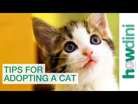 Cat Adoption & Rescue: Tips for Adopting a Cat from a Shelter