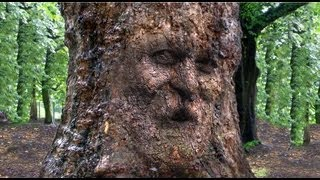 Photoshop Tutorial How To Camouflage A Face Onto Gnarly Tree Bark