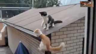 #x202b;قطط تلعب مع اصحابها  أفضل مقاطع القطط#x202c;lrm;