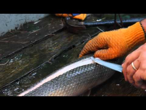 How to Clean and Filet Gar