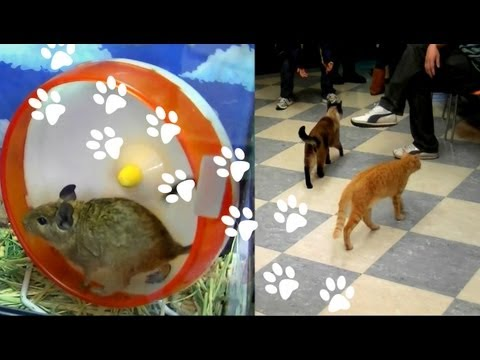 • INSIDE a Japanese 'Cat Cafe' & Pet Shop! Ikebukuro, Tokyo Japan •