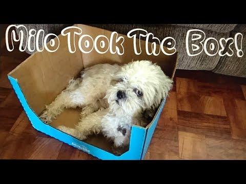 Milo Took The Box!