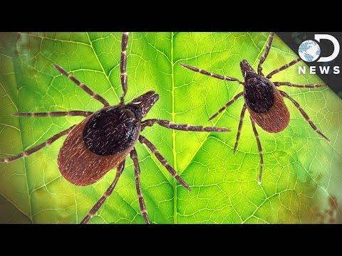 How Dangerous Is Lyme Disease?