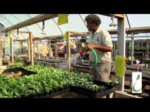 Compost Tea Time with Biodynamic Grower Oscar Carmona