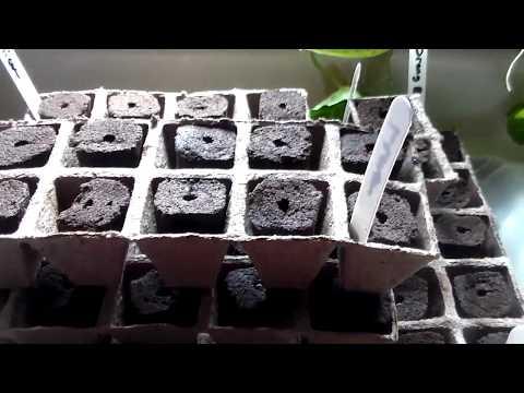 Seed Time in NE Arkansas