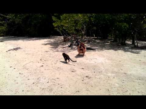 Philippinen, Palawan, Snake Island