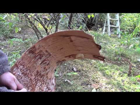 EASY!  HOW TO MAKE AND USE A MOOSE CALL