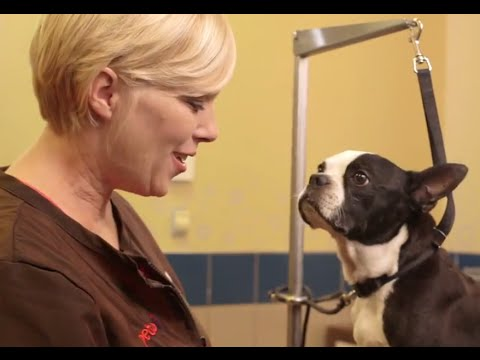 How to Cut Your Dog's Nails (Petco)