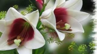 Orhideea Orhidee