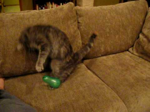 Kitty and static electricity with balloon