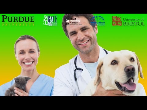 Veterinary Education – FREE Access – Continuing Education