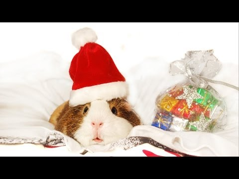 Happy Holidays from Pets Add Life