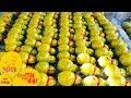 Bến Tre: Độc đáo dừa hồ lô   VTC1