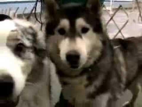 Dog Sitter Video 2