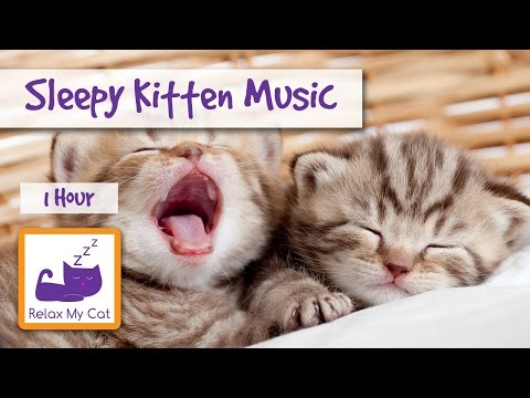 Sleepy Kitten Music! The Perfect Music to Make your Kitten Calm Down and go to Sleep!