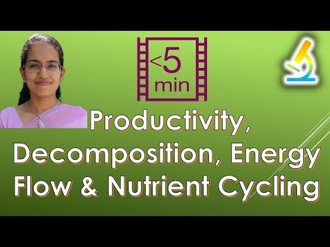 4 Functions of Ecosystem - Productivity, Decomposition, Energy Flow & Nutrient Cycling