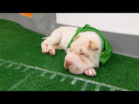 Game Day Revisited: Puppy Bowl XIV