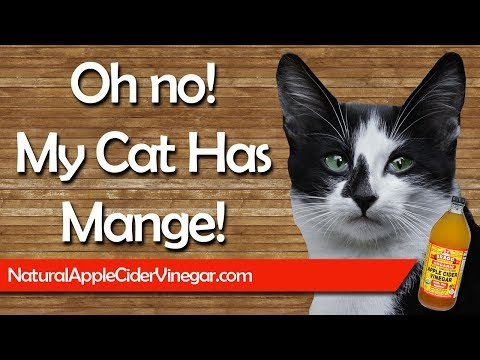 How to Naturally Cure Cat Mange with Apple Cider Vinegar