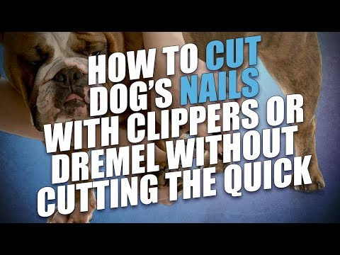 How to Cut Dog's Nails with Clippers or Dremel Without Cutting the Quick
