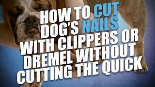 How To Cut Dogs Nails With Clippers Or Dremel Without Cutting The Qui