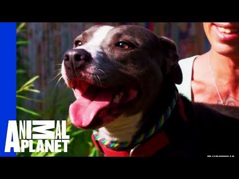 Waiting for a Forever Home: Wanda | Pit Bulls & Parolees