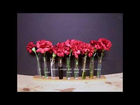 Flower experiment