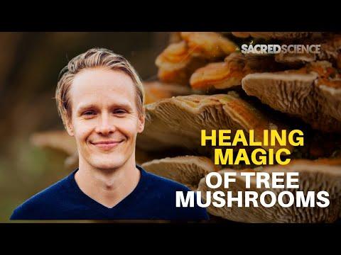 The Healing Magic of Tree Mushrooms